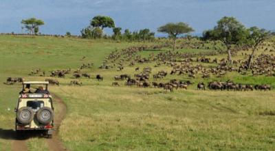 wildebeest-safaris-mara