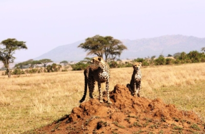 serengeti-safaris