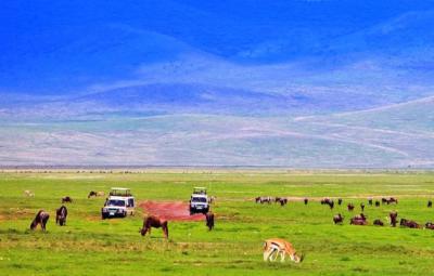 ngorongoro-crater-safari