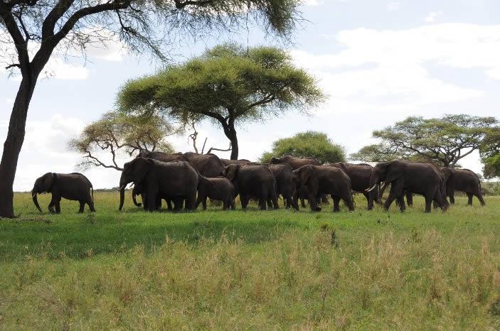 tarangire-safari