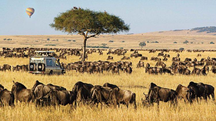 3 Days Masai Mara 4×4 Private Camping Safari - 7 Pax | Kenya Tours